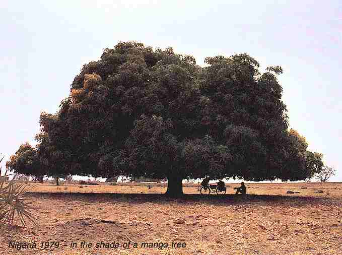 Nigeria 1979 - in the shade of a mango tree