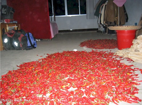 Drying chili peppers of the room I spent the night